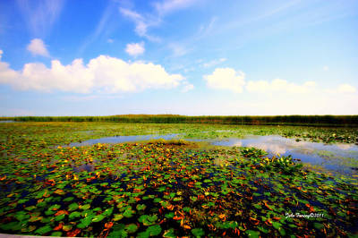 The Bog At Point Pelee Art Print