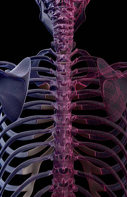 The Bones Of The Upper Body Art Print by MedicalRF.com