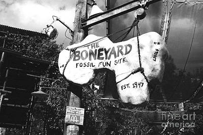 Digital Art - The Boneyard Sign Animal Kingdom Walt Disney World Prints Black And White Film Grain by Shawn O'Brien