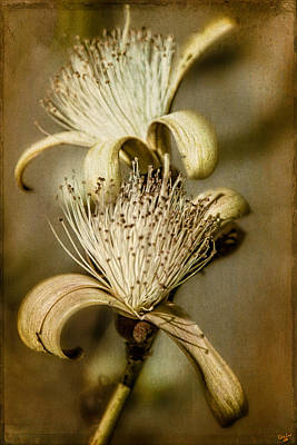 Photograph - The Botany Specimen by Chris Lord