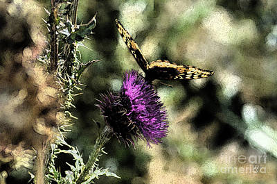 Photograph - The Butterfly I by Donna Greene