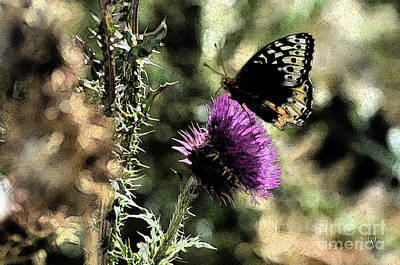 Photograph - The Butterfly IIi by Donna Greene