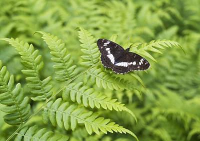 Art Print featuring the photograph The Butterfly On Fern Sheet by Aleksandr Volkov