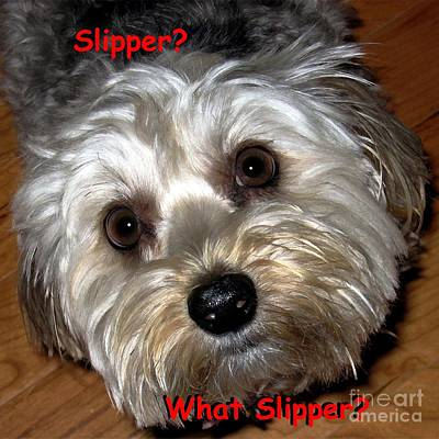 Cute Dog Digital Art - The Case Of The Missing Slipper by Dale   Ford
