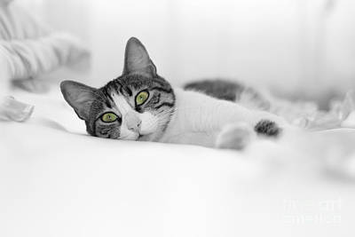 The Cat  Art Print by Zafer GUDER
