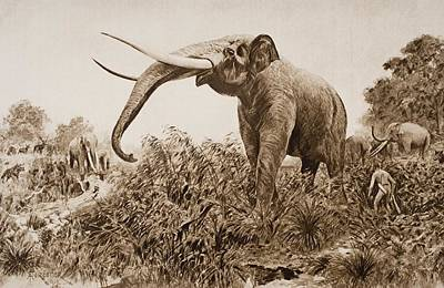 The Chatham Elephant. From Fossil Art Print by Ken Welsh