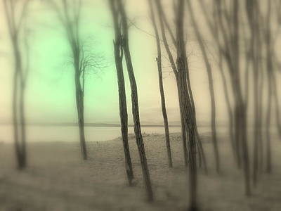Photograph - The Circle Green - Grove By The Sea by Kathleen Grace