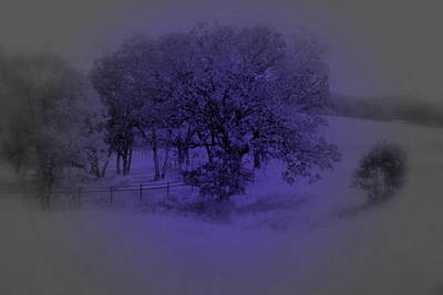 Photograph - The Circle Violet Tree by Kathleen Grace