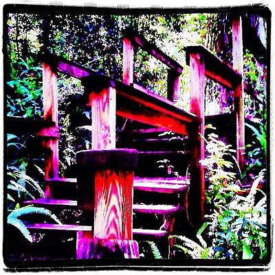 Iphone 4 Photograph - The Climb Up - At Ravine Gardens State by Photography By Boopero