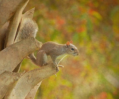 Fox Squirrel Photograph - The Climber by Kim Hojnacki