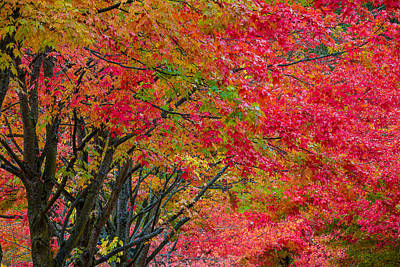 The Color Of Fall Art Print by Ken Stanback