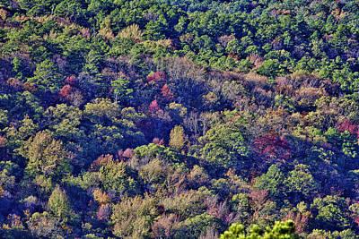 The Colors Of Autumn Art Print by Douglas Barnard