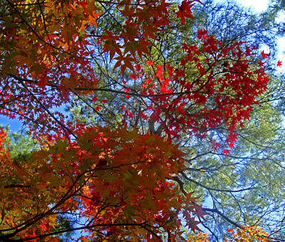 Photograph - The Colors Of Autumn by Roberto Alamino