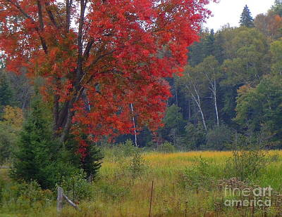 The Colors Of Fall Art Print by Anne Gordon