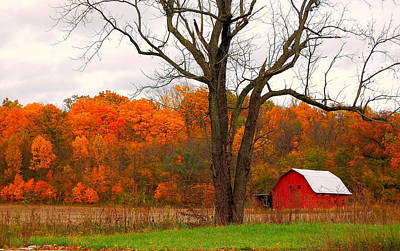 The Colors Of Fall Art Print by Robin Pross