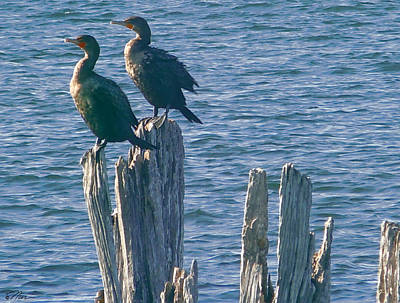 Photograph - The Cormorants Basking by Nancy Griswold