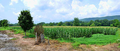 Art Print featuring the photograph The Corn Field by Paul Mashburn