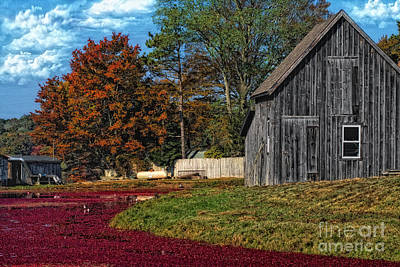 Waterview Photograph - The Cranberry Farm by Gina Cormier
