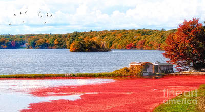 Photograph - The Cranberry Farms Of Cape Cod by Gina Cormier