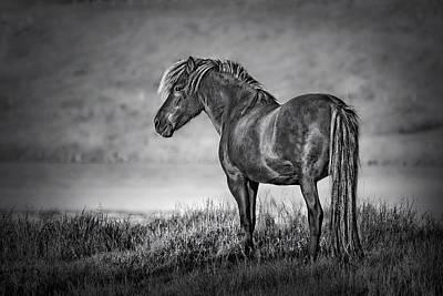 Animals Photos - The Dark Goddess by Evelina Kremsdorf