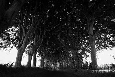 Armoy Photograph - The Dark Hedges Old Avenue Of Beech Trees Which Have Overgrown The Road Armoy County Antrim Ireland by Joe Fox