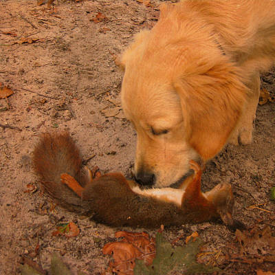 Photograph - The Dead Squirrel And The Mourning Puppy by Nop Briex