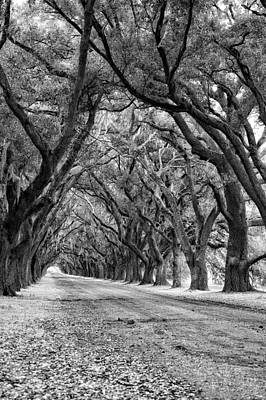 Evergreen Plantation Photograph - The Deep South Monochrome by Steve Harrington