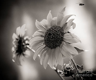 Photograph - The Destination by Sherry Davis