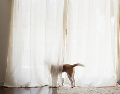 Y120907 Photograph - The Dog Which Looks At The Outside Of A Window by Yuki Kondo