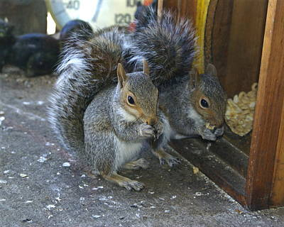 Photograph - The Doublemint Twins Of Squirrelville by Ben Upham III