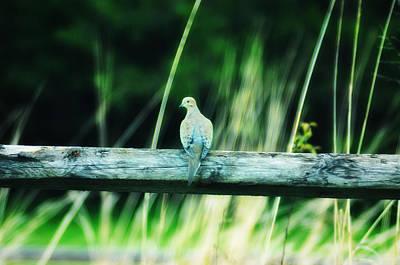 Dove Digital Art - The Dove by Bill Cannon