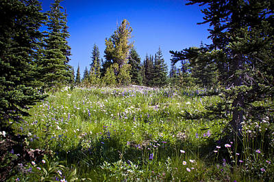 Photograph - The Emmons Meadow At Mount Rainier by David Patterson