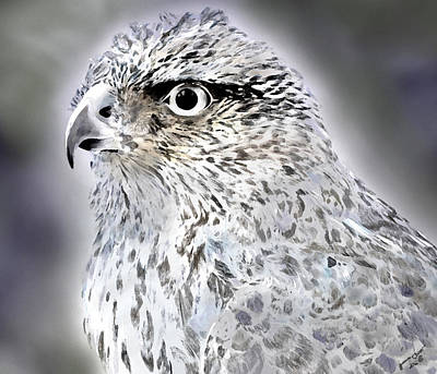 The Eye Of An Eagle  Art Print by Yvonne Scott