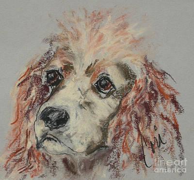 Cocker Spaniel Drawing - The Eyes Tell It All by Cori Solomon