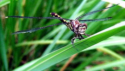 Art Print featuring the photograph The Face Of A Dragonfly 02 by George Bostian