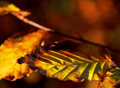 The Fires Of Autumn Art Print by Odd Jeppesen