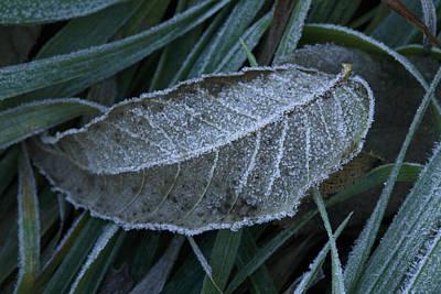 Konza Prairie Photograph - The First Frost On Konza Prairie by Jim Richardson