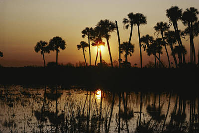 Swamp Cabbage Photograph - The Flaming Orange Sun Sets by Bates Littlehales