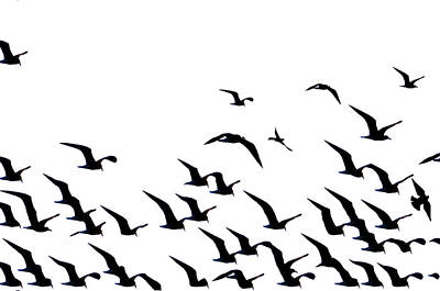 The Flock Art Print by Bill Cannon