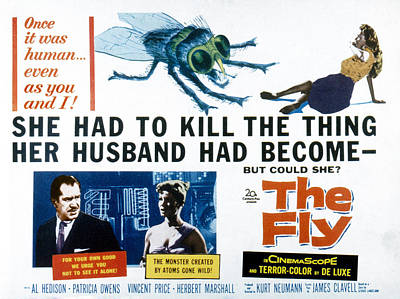 Housefly Wall Art - Photograph - The Fly, Vincent Price, Patricia Owens by Everett
