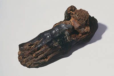 Egyptian Mummy Photograph - The Foot Of An Egyptian Mummy by Volker Steger