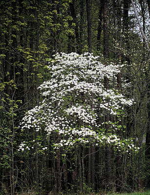 Photograph - The Forest's Edge by JC Findley
