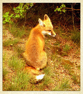 Photograph - The Fox by Cristophers Dream Artistry