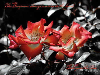 Photograph - The Fragrance Always Remains by Karen Lewis