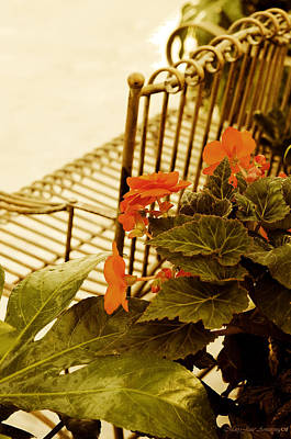 Photograph - The Garden Bench by MaryJane Armstrong