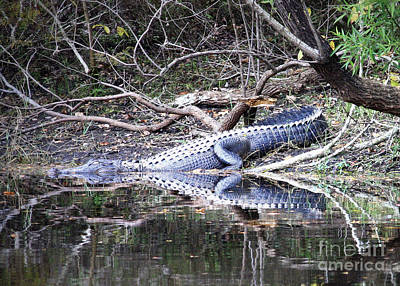 The Gator That Lives Under The Bridge Print by Carol Groenen