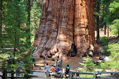Photograph - The General Sherman by Heidi Smith