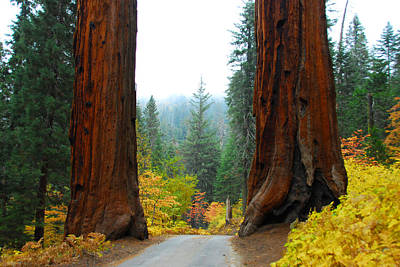 Photograph - The Giants Of The Forest by Lynn Bauer