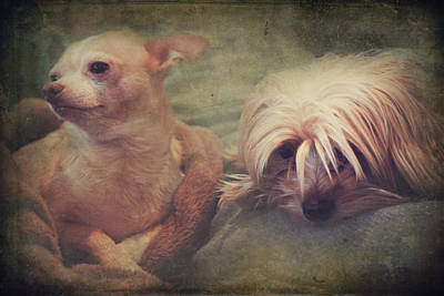 Yorkie Digital Art - The Girls by Laurie Search