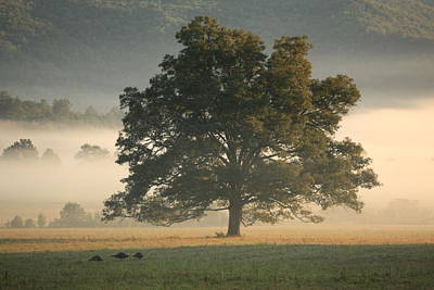 Art Print featuring the photograph The Giving Tree by Doug McPherson